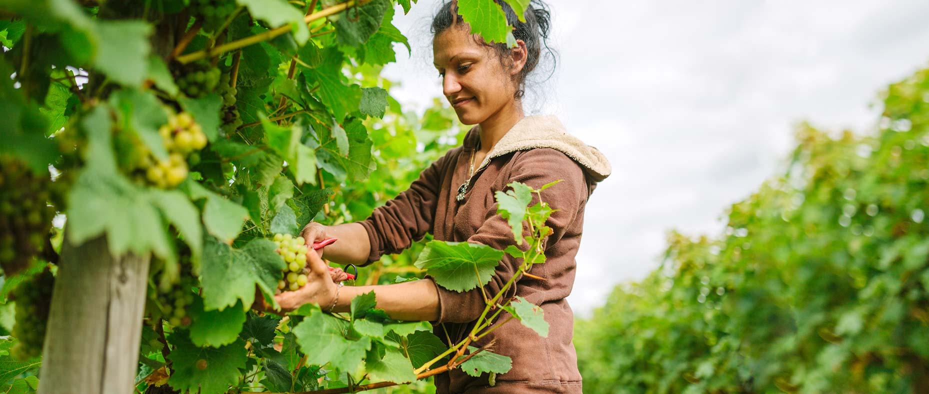 Washington Wine Industry Foundation Slide