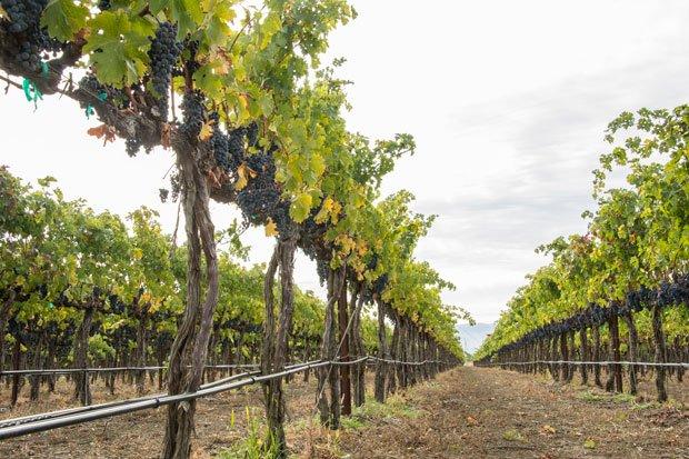 Turning Sensory Skills into Wine